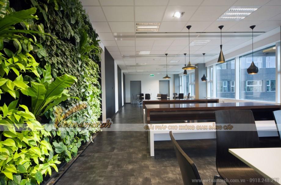 Mang cây xanh vào văn phòng