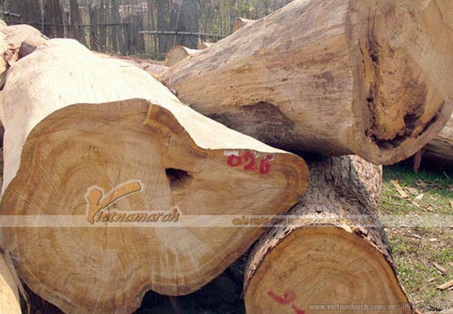 Mẫu gỗ pơ mu tự nhiên