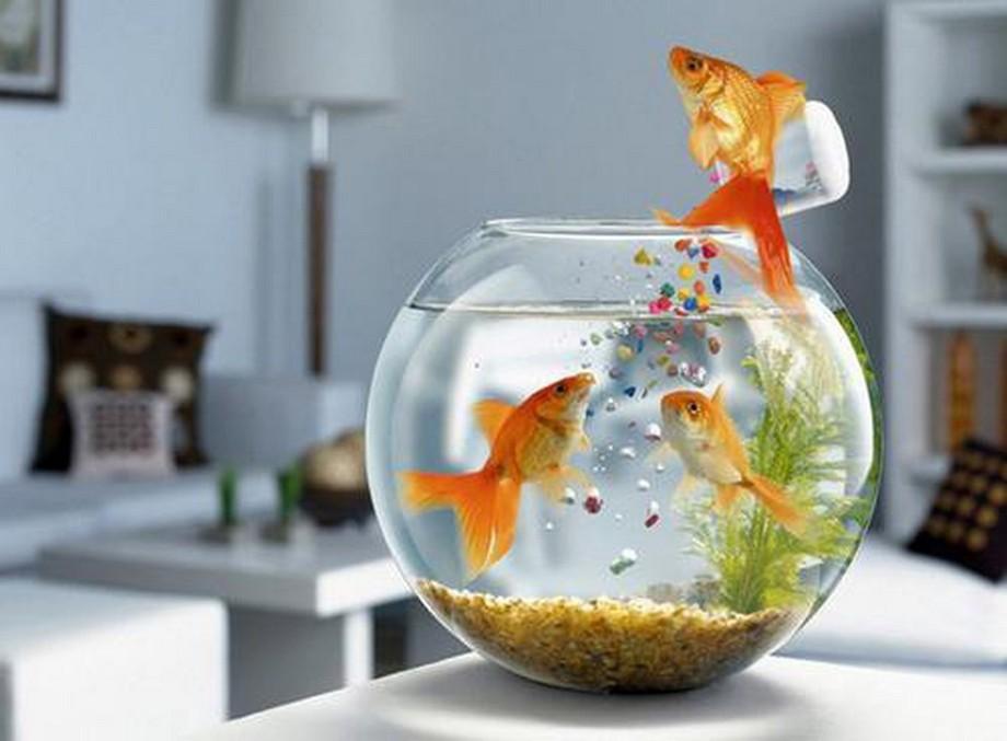 Hồ/bể cá cảnh giúp làm đẹp cho không gian nội thất