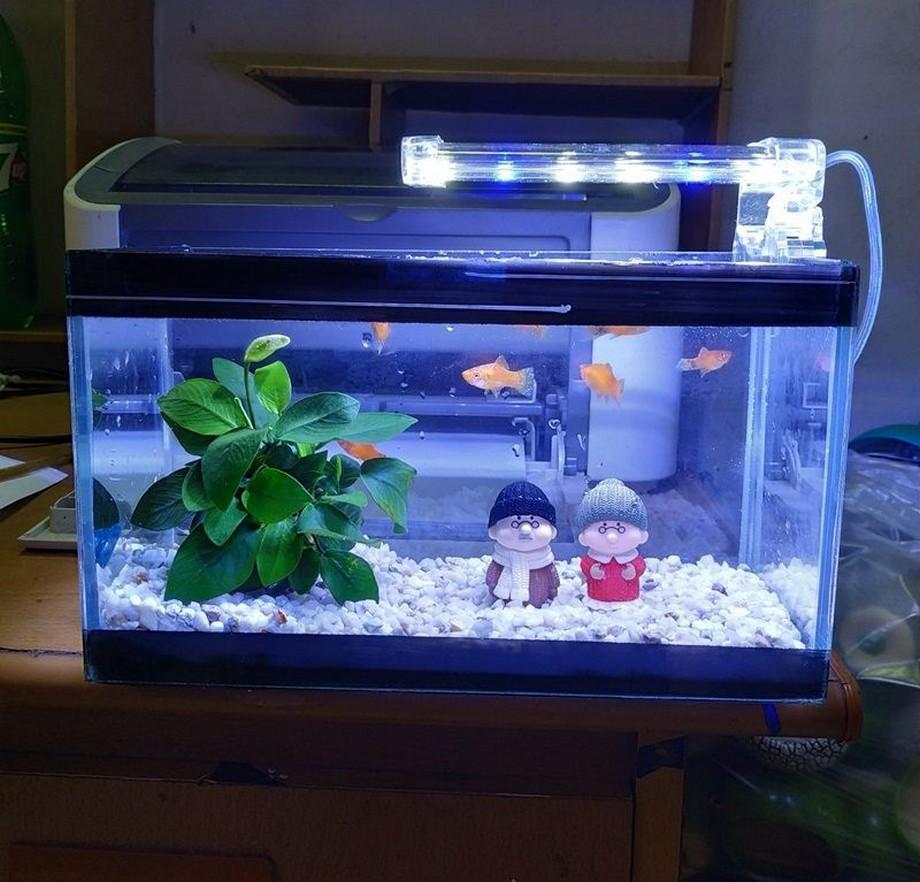 Hồ/bể cá trong phòng ngủ nên chọn loại nhỏ
