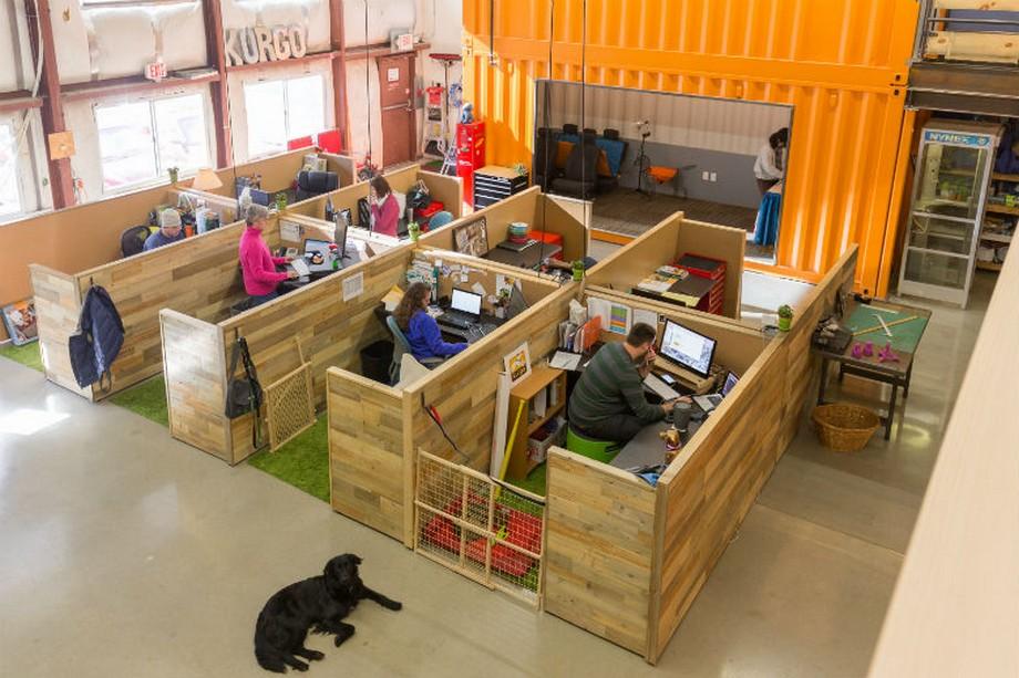 Thiết kế văn phòng độc đáo thân thiện với thú cưng