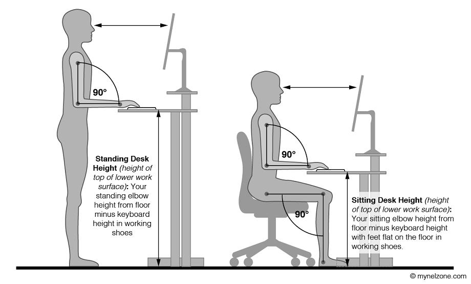 Ứng dụng nhân trắc học trong thiết kế văn phòng