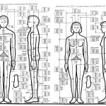 Vai trò của Nhân trắc học trong thiết kế nội thất văn phòng