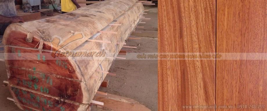 Gỗ gõ đỏ là loại gỗ quý hiếm