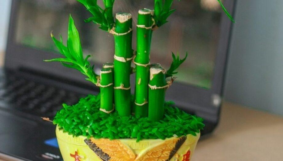 Muốn phát tài phát lộc hãy đặt ngay cây phát tài tại bàn thờ nhà bạn