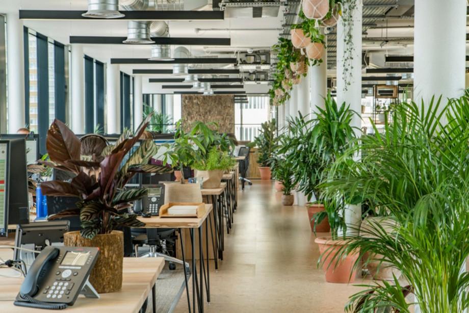 Nguyên tắc thiết kế sân vườn văn phòng